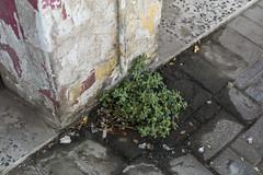 Life (heshaaam) Tags: life flowers plants decay urban bahrain