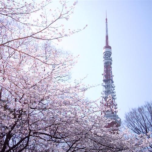 tower and sakura