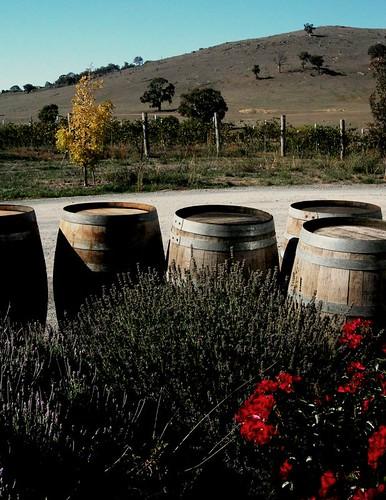Dionysus Winery por sonofwalrus.