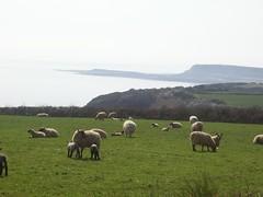 Cute lambs!!!
