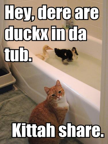 ducks in a bath tub with a housecat watching over them