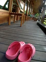 沒有同伴只好請出我的粉紅色洞洞鞋