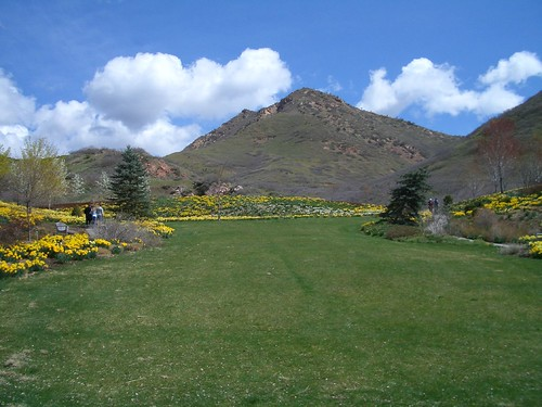 Hillside at Red Butte gardens