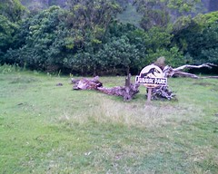 Jurassic Park tree at Kualoa Ranch