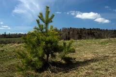Loneliness (Anatoliy Odukha) Tags: nature ukraine skole carpathian naturesfinest