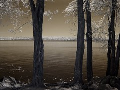 River Trees 1