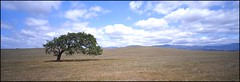 Lone Oak (Chris28mm) Tags: california sky usa tree 120 film clouds analog mediumformat landscape panoramic oaktree e6 largeformat lonetree 617 toyo 6x17 dayi kodake100g naturesfinest 210mm specnature chris28mm treesubject dayirollfilmback centerfilter fujichromevelvia100rvp thesecretlifeoftrees copyright2007chrisjackson