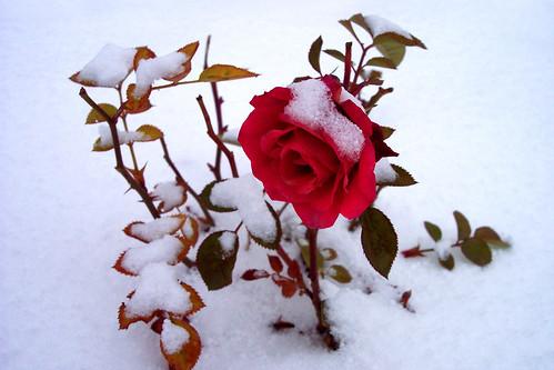 Snežne čarolije - Page 2 473259767_4a6464971e