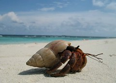 holy crab (ahmed (John)) Tags: blue sky white beach island sand crab maldives peopleschoice abigfave aplusphoto spittinshells macromarvels