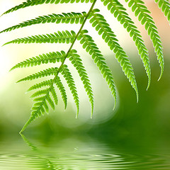urban oasis (DocTony Photography) Tags: plant fern green nature leaves leaf bravo flood philippines greenbelt3 makati peopleschoice interestingness2 supershot magicdonkey abigfave artlibre superaplus aplusphoto doctony superhearts explore7may2007 womblingtasticimageo invitedpro