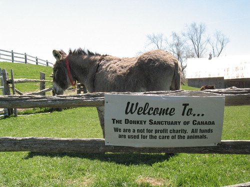 Welcome to The Donkey Sanctuary of Canada