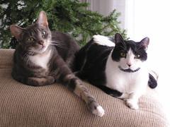 Gizmo and Brat