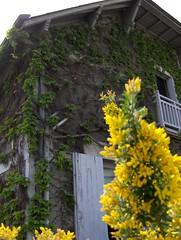 House In Azay-le-Rideau (Joe Shlabotnik) Tags: flowers france 2007 azaylerideau april2007