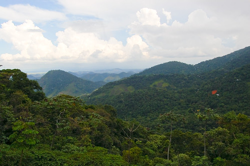 Brazilian rain forest. Photo by Christoph Diewald via Flickr.