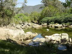 Swampl plains river NSW (hollis_corey) Tags: mountains water river fishing nsw trout snowymountains troutfishing khancoban swampyplainsriver