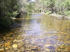Swampy plains river (hollis_corey) Tags: mountains water river fishing snowy nsw flyfishing trout snowymountains troutfishing khancoban swampyplainsriver