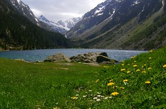 Flowers, Lake,  Mountain (AlphaTangoBravo / Adam Baker) Tags: blue lake france flower green daisies lac daisy zenitar pyrenees cauterets lacdegaube pontdespagne vignemale zenitar1628fisheye