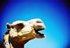 moroccan taxi (lomokev) Tags: animal mammal lomo lca xpro lomography crossprocessed xprocess taxi lomolca camel morocco agfa jessops100asaslidefilm agfaprecisa essaouira lomograph agfaprecisa100 cruzando precisa jessopsslidefilm file:name=20070510lomolcad23 use:on=moo