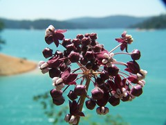 20070513 Wildflower