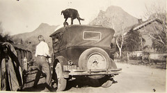 a playful dog on top of an old car (deflam) Tags: old arizona dog mountain west car kids vintage children ray licenseplate firehydrant western 1928 playful miningtown teapotmountain