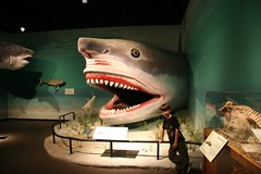 Connor's favorite shark, Megalodon