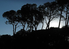 Trees (pennyeast) Tags: trees nature silhouette landscape southafrica scenery scenic capetown cape may2007 papaalphaecho