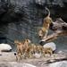 Tierpark Hagenbeck_4