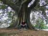 Me on fig tree (nospuds) Tags: tree park phil sydney fig