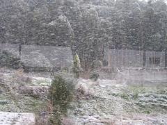 930125, 飛鳥大風雪