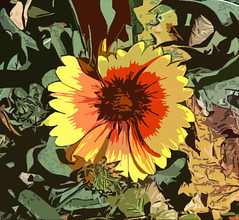 blanket flower - digital art