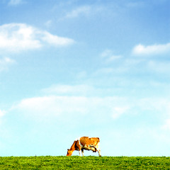 Lone Cow (BombDog) Tags: sky topf25 grass photography cow curated003 jonlucas jonathanlucas