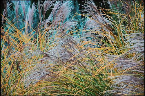 Zoo grass