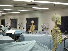 Gross Anatomy Lab 04