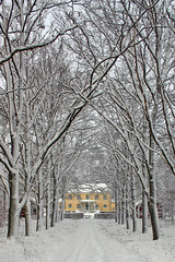 Hammar (Steffe) Tags: road november trees winter house snow building yellow interestingness sweden tungelsta haninge 2004yitl avenue yf hammar winterinsweden swedishcalendar