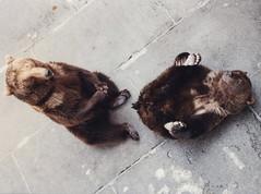 [フリー画像] 動物, 哺乳類, クマ科, 熊・クマ, カップル (動物), 201005081100