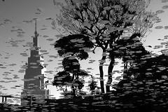 Fall in Shinjuku (ciro@tokyo) Tags: park autumn blackandwhite bw reflection fall 2004 topf25 leaves japan topv2222 garden tokyo topf50 shinjuku 25 urbannature topf150 topf100 bwdreams cotcpersonalfavorite urbannatureblog
