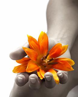 flowerblw