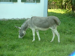 Esel Nr. 2