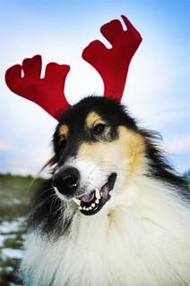 My Christmas Dog