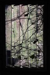 bunkhouse window (zen) Tags: windows nature va thousand 20041124 10up3 longfarm 3000th zensutherland