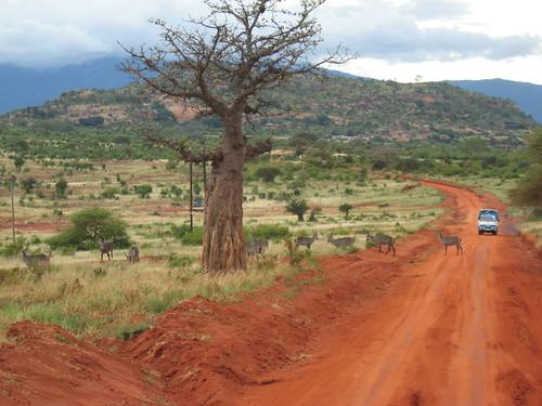 Un safari in Kenya, Africa.