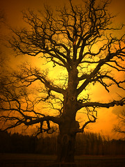 Trees (Truus) Tags: sunsets around house wow