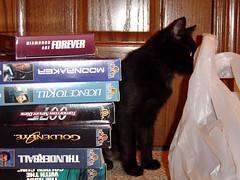 Named (nicholasjon) Tags: gert cat blackcat kitten