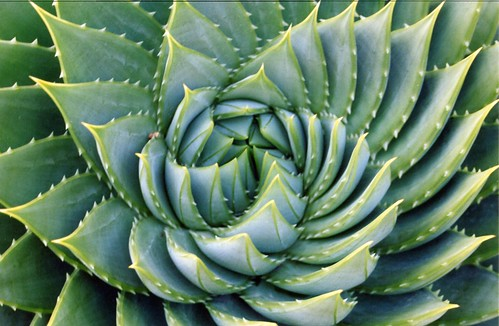 plants topf25 spiral aloe pattern fibonacci mathematics fractal ucberkeley
