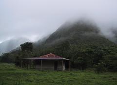 Abandonned cabin in Martinique