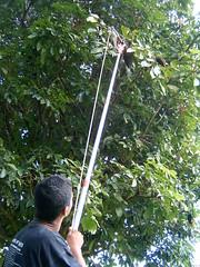 11 Fev 2004 Curso de Viveirista SENAR 025 (joaobambu) Tags: 2004 february cursosenarviveirista echapor brasil brazil echapora people nature