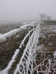 fence line post  all rights reserved (Pogonip) Tags: pogonip frost nevada winter white fotolog rimefrost desert highdesert