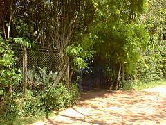PIC00014 (joaobambu) Tags: 1999 february fazenda farm familia brasil brazil echapor echapora