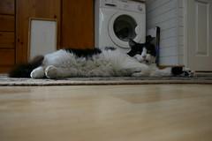 150-5084_IMG (Catfunt) Tags: mimmo