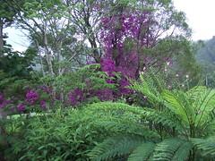 Australia 2003 114.jpg (Caroline Harrison) Tags: tree